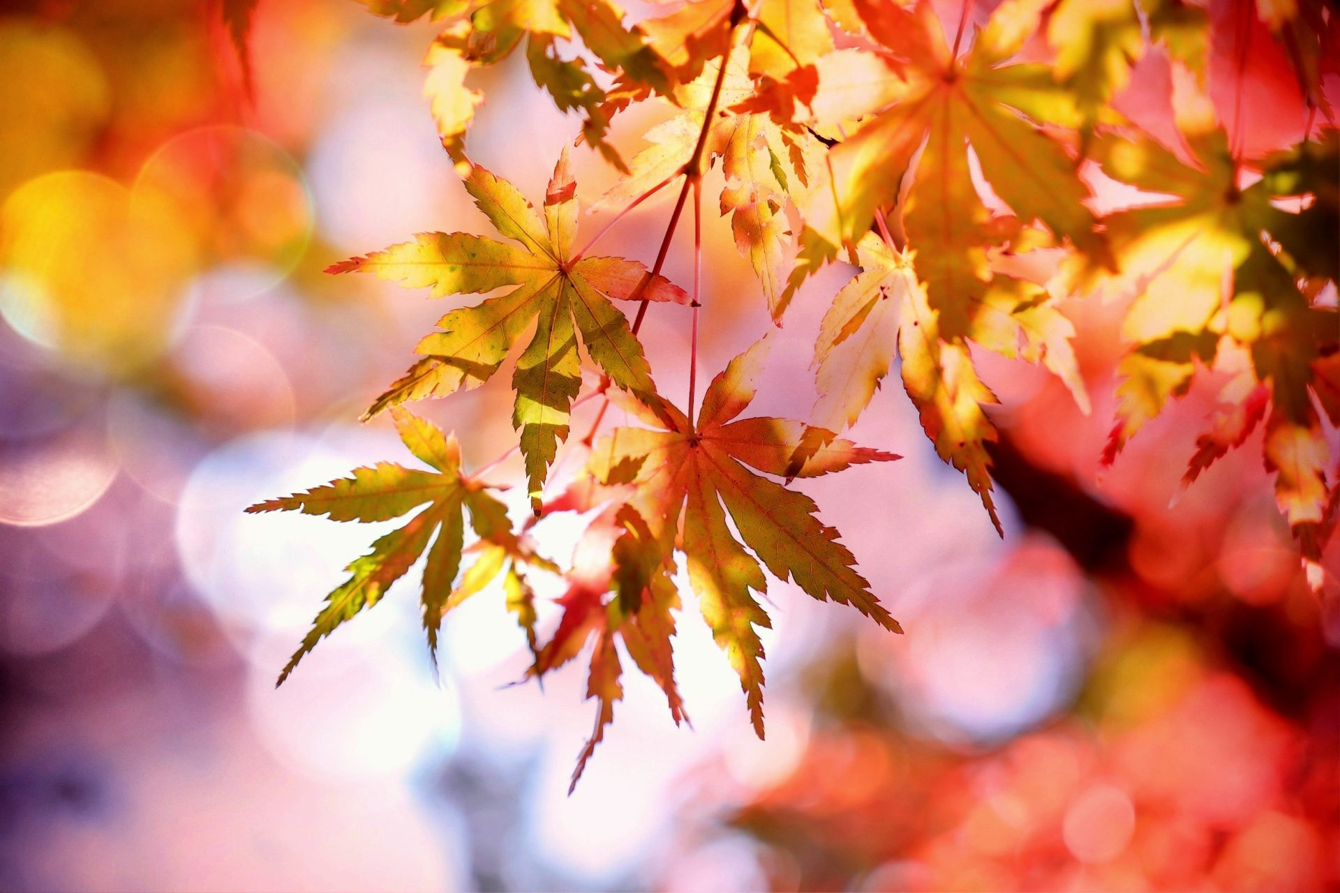 How to Sell Your Property in Autumn